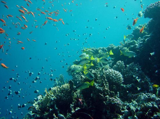 Sharm El Sheikh Marriott Resort: Du trenger ikke dra på båttur for å oppleve flotte rev. Ta taxi til El-Fanar beach og hopp i hav