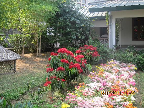 IORA - The Retreat,Kaziranga: flowers in the resort