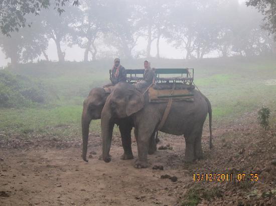 IORA - The Retreat,Kaziranga: elephant safari