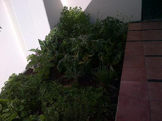 The Corner House: The veggie garden