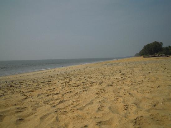 Cherai Beach: Looking north on the beach