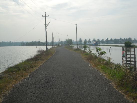 Cherai Beach: Cycling through the backwaters