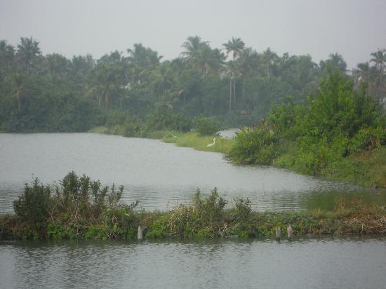 Cherai Beach: Backwaters