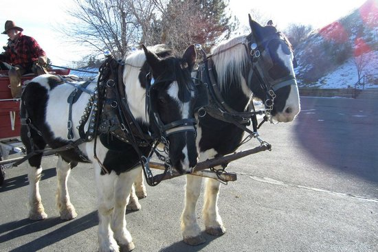 Rocky Mountain Outfitters: Horses on the wagon ride.