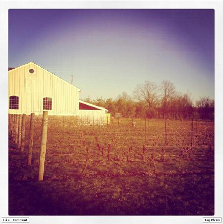 Hopewell Valley Vineyards: Chilly, Wintry Days at the vineyard
