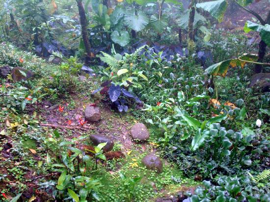 Villa Blanca Cloud Forest Hotel and Nature Reserve: Self-guided hiking path on the hotel property