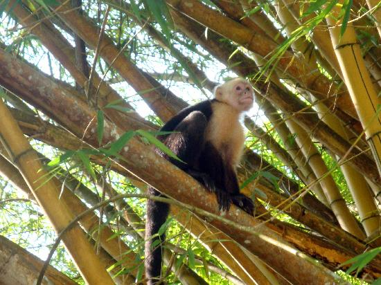 Curu National Wildlife Refuge : Friendly monkeys