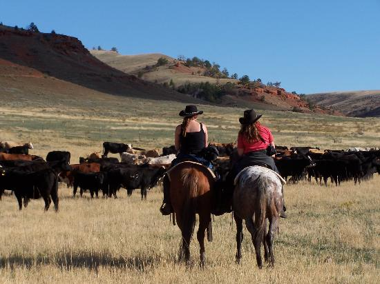 Hip and Loretta - Picture of TX Ranch, Lovell - Tripadvisor