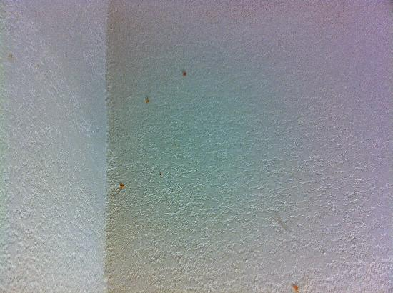 Quality Inn Media: Cobwebs and dirt on the ceiling