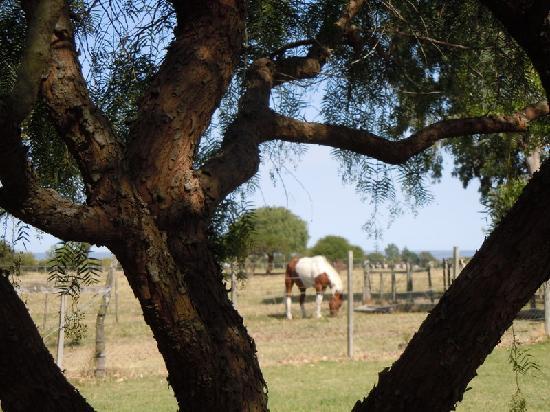 Posada de Campo Gondwana: Pancho