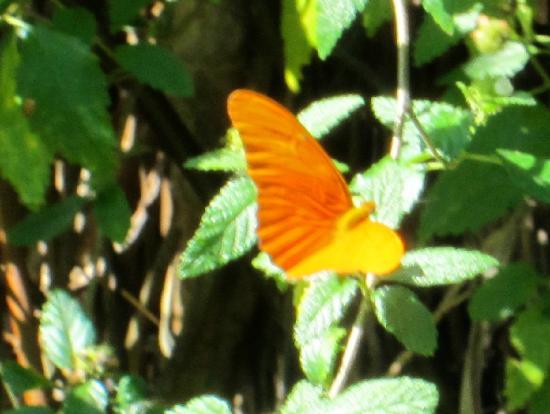 Royal Palm Reserve : Butterfly