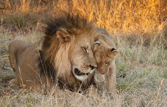 Tswalu Kalahari Game Reserve, Sudáfrica: Snuggling up to Daddy-O