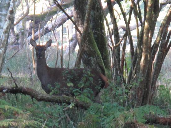 Le Mousseau : Une biche dans le Parc