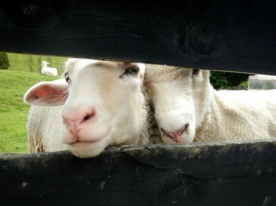 Sheepworld: Sheep!