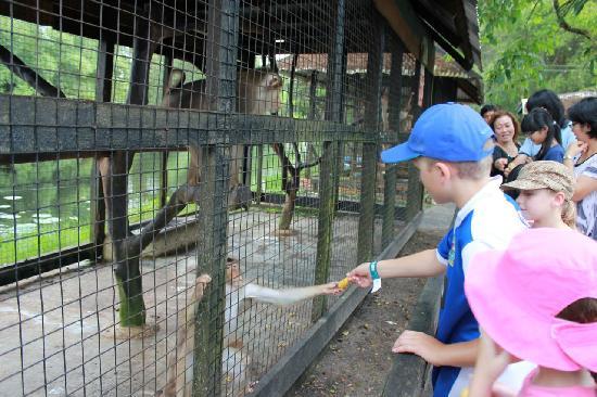 Crocodile Farm: Feeding the monkeys