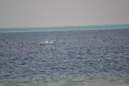 Cocoa Island by COMO : Dolphin watch from room, if lucky