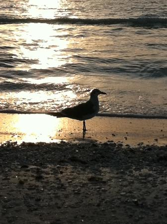 Tropical Beach Resorts: Crescent beach and dusk.