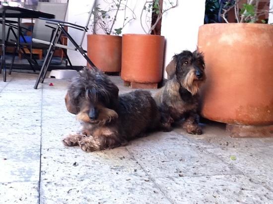 Hotel Gourmet Plaza: Rogelio y Frida
