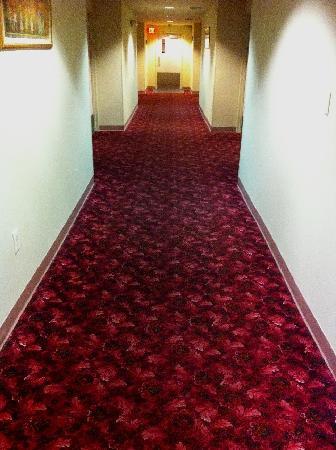 Baymont Inn & Suites : Carpet in hallway - the dark area is not a shadow