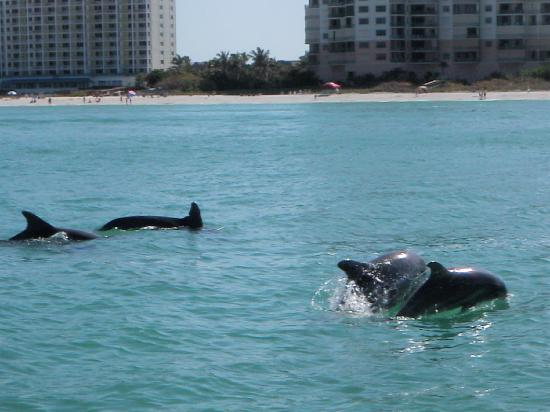 Marco Island Water Sports : dolphins
