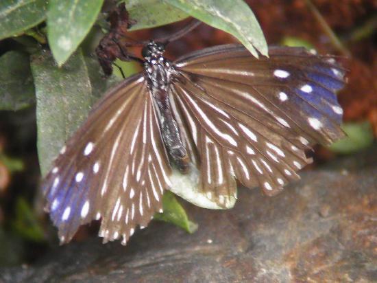 Entopia: Auf der Schmetterlingsfarm
