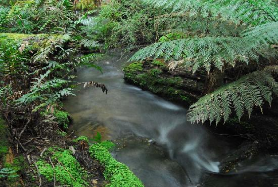 Liffey Falls: Side stream
