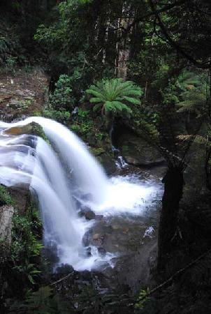 Liffey Falls: Middle falls from a viewing platform