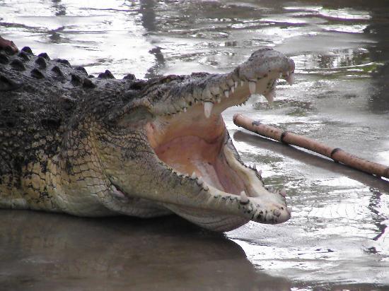 写真Tuaran Crocodile Farm枚