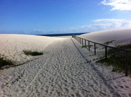 Kirra Beach: kirra dunes
