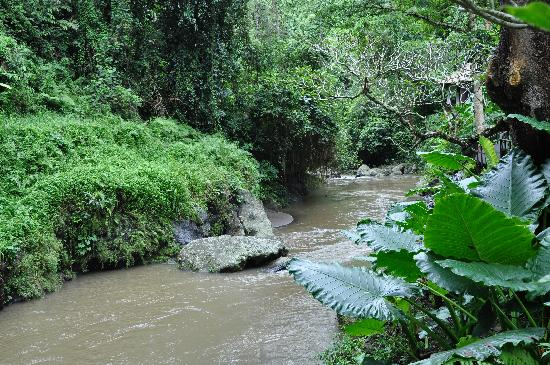 Maya Ubud Resort & Spa: River on the side of hotel