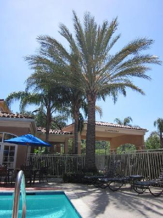 Hilton Garden Inn Calabasas : Pool mit Palmen