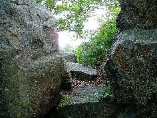 Bergius Botanic Garden: Fjället (the mountain)