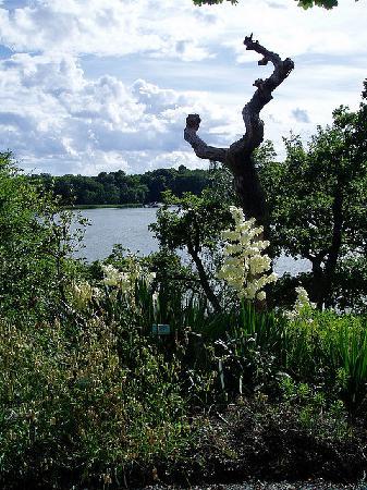 Bergius Botanic Garden: The park