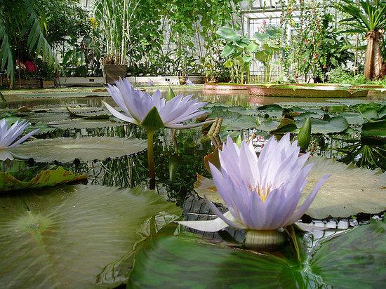 Bergius Botanic Garden