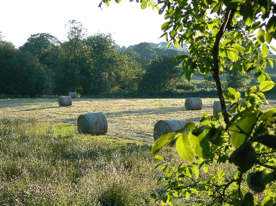Dolish Farmhouse Bed & Breakfast: The field on a July evening