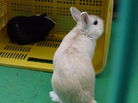 Meguro, Japón: ウサギ他小動物がいます