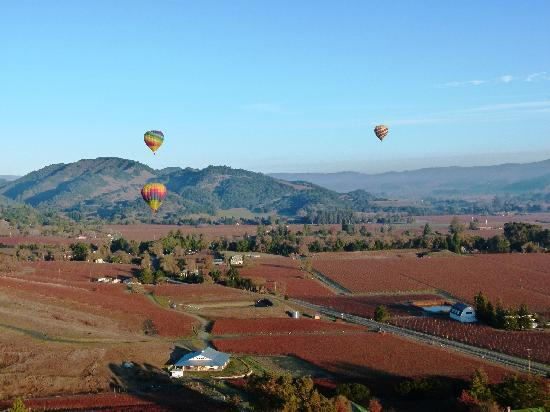 写真Napa Valley Aloft Balloon Rides枚