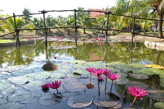Pandanus Resort: Pandanus green area