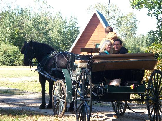 Serenity Springs : Horse and Carriage