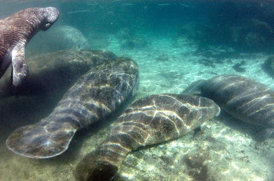 Fun 2 Dive Scuba, Snorkeling and Manatee Tours: Bunches