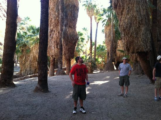 Palm Springs, CA: Palm grove