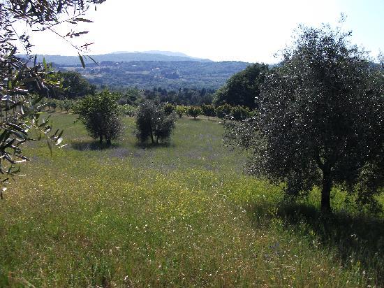 Farmhouse Olmo B & B : i fiori tra gli ulivi