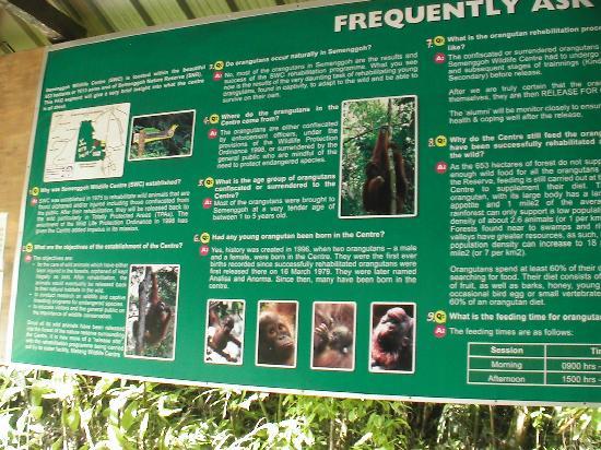 Semenggoh Nature Reserve: Infotafel im Park