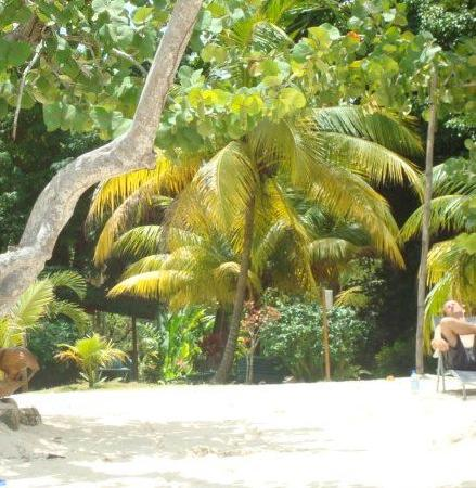Whistling Bird Resort: Whistling Bird beach