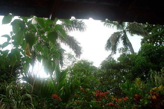 Whistling Bird Resort: porch view