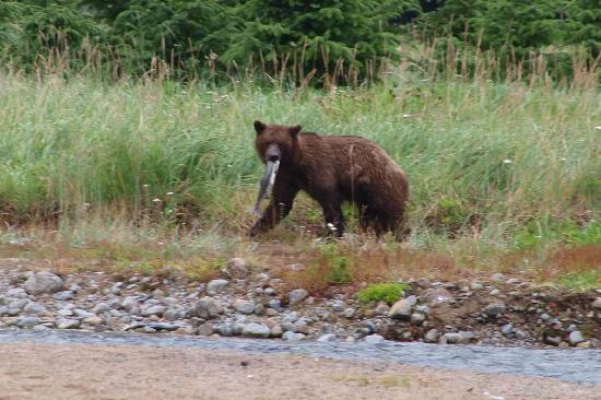 Chilkoot Trail Outpost: The grizzly with a salmon