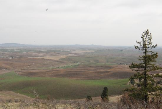 Kamiak Butte County Park : Rolling Palouse hills in the background all around