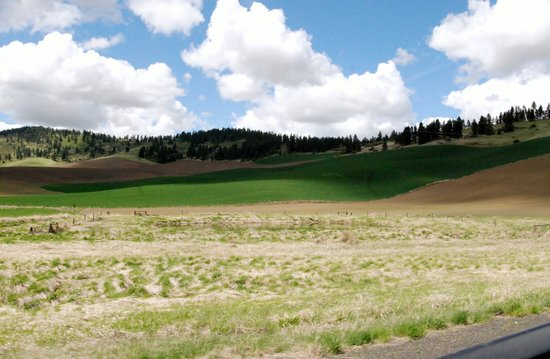 Kamiak Butte County Park : View from highway up to the backside of Kamiak Butte