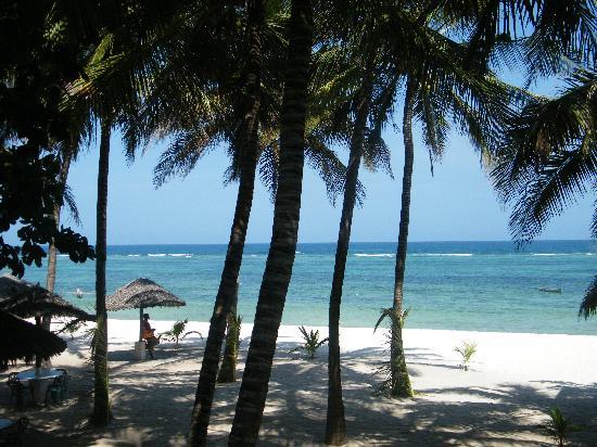 SheShe Baharini Beach Hotel: palme