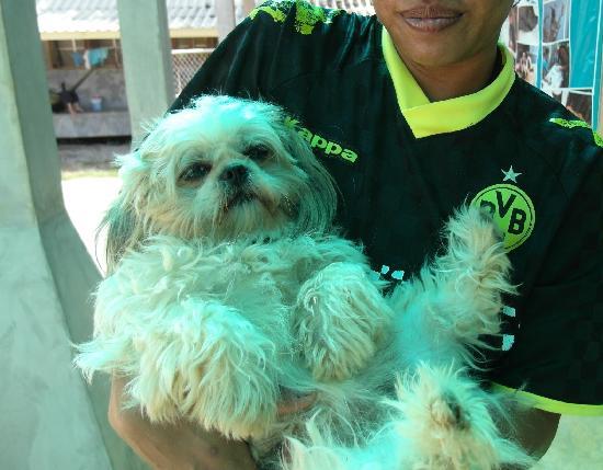 Lanta Animal Welfare: Doggie brought in - had a bad case of diarrhea